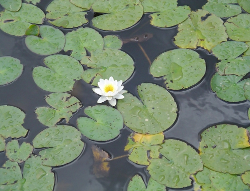 El lago del Bierzo